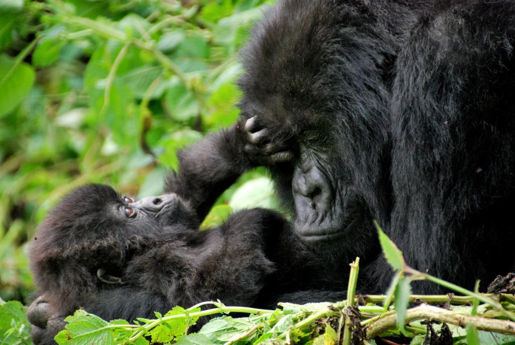 Gorilla-Mutter mit Kind